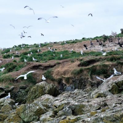 301 Ground nesting birds